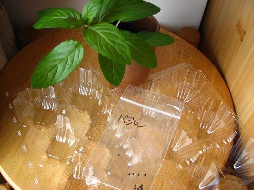 ミントは葉から、バジルは種からスタート
