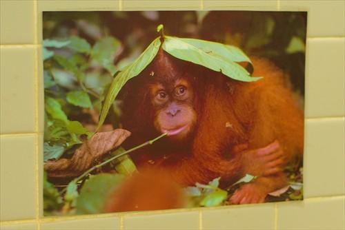 2014年の猿面は1,000個に1個がこれ・・・とか?