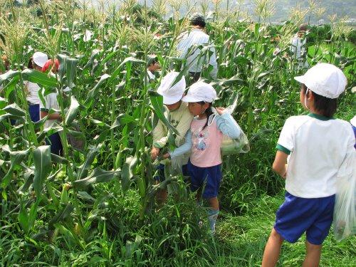 自然と協力しながら収穫しています