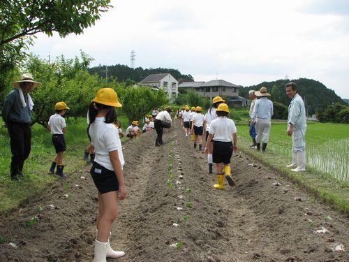 大豆の苗もすでにセッティング済み
