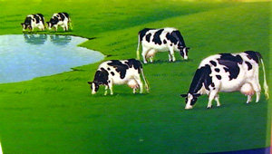 のんびり牛ら