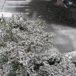 今年も福岡は雪が積もりました