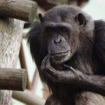 動物園は飼育員さんの魅力も大事