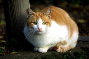 222_cat09