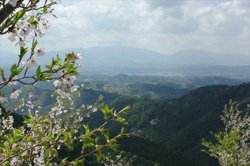 奈良県吉野の千本桜