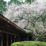 奈良県吉野山奥千本~♪奥千本~♪桜の旅行記みい