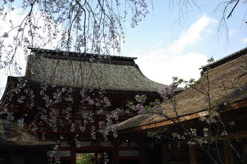 境内から桜門を望む