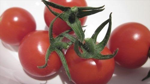 20160710_tomato03