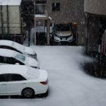 暖冬からの雪です