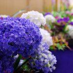 花の輪・人の輪-みんなの花展 季・あじさいいろ